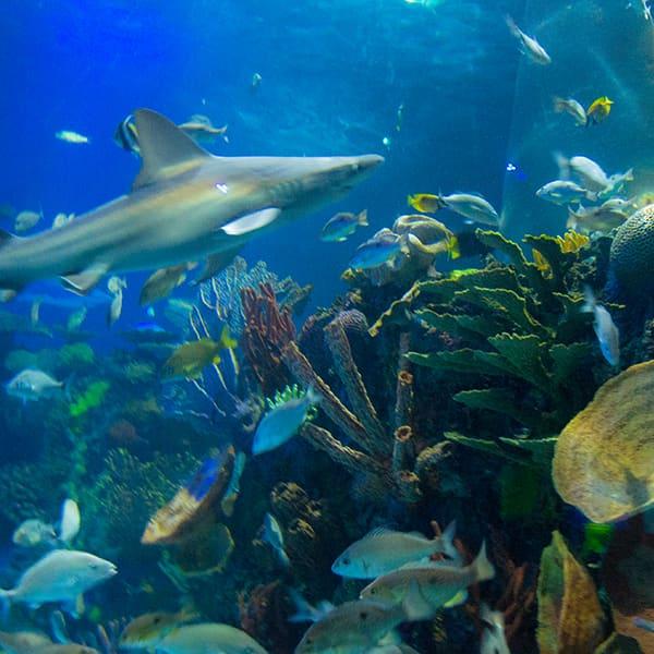 nuestras-exhib-oceanarioB